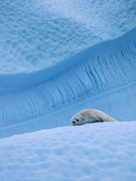 Blue Ice Bed