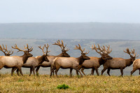 Hooves (elk, deer, sheep)